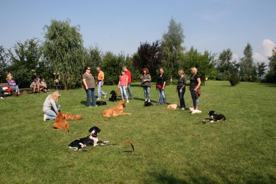 Apollo Hundeschule Und Pension Welpenspielen